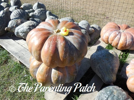 The Duck and the Pink Pumpkins