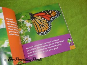Inside Look and Learn Insects Books