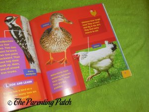 Inside Look and Learn Birds Books