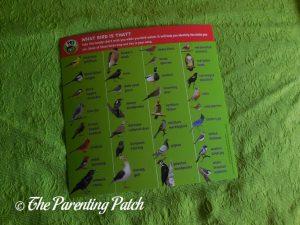Look and Learn Birds ID List