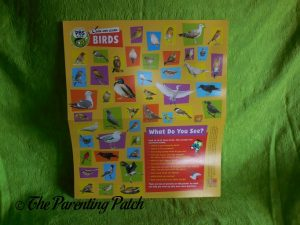 Look and Learn Birds Activity Poster