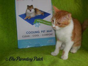 Pumpkin with LotFancy Self-Cooling Gel Pet Mat