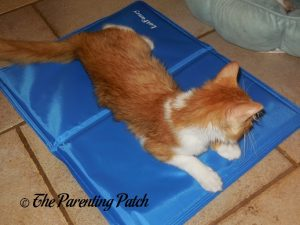Pumpkin on LotFancy Self-Cooling Gel Pet Mat on Floor 1