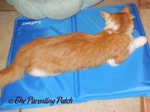 Pumpkin on LotFancy Self-Cooling Gel Pet Mat on Floor 2