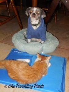 Pumpkin on LotFancy Self-Cooling Gel Pet Mat on Floor with Espen