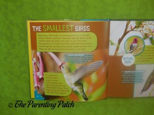 Inside Pages of Bird-acious