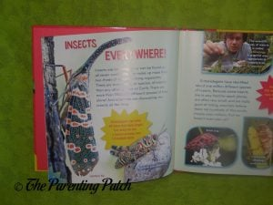 Inside Pages of Insect-o-mania!