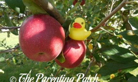 The Duck and the Apple Tree