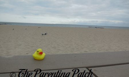 The Duck and the Coney Island Channel