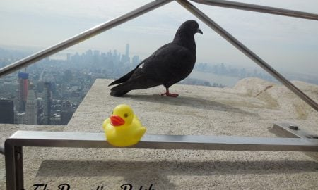 The Duck and the Pigeon on the Empire State Building