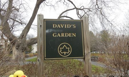 The Duck and David's Garden