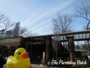 The Duck and the Central Park Zoo