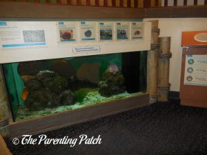 Fish Tank at Brooklyn Children's Museum