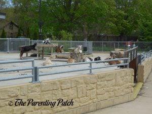 Goats at Henry Vilas Zoo