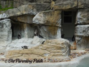 Penguins at Henry Vilas Zoo