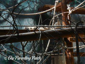 Lemurs at Henry Vilas Zoo