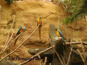 Macaws at Henry Vilas Zoo