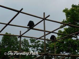 Monkeys at the Cincinnati Zoo and Botanical Garden
