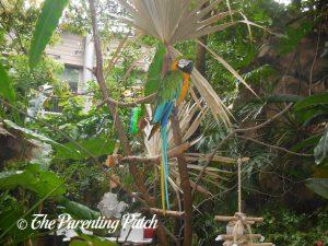 Macaw at the Cincinnati Zoo and Botanical Garden