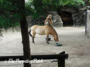 Horse and Camel at the Cincinnati Zoo and Botanical Garden