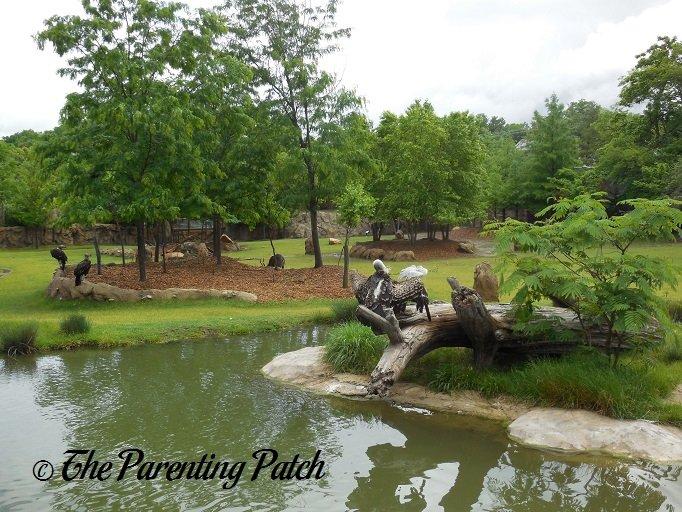 Family Fun In Ohio Cincinnati Zoo And Botanical Garden