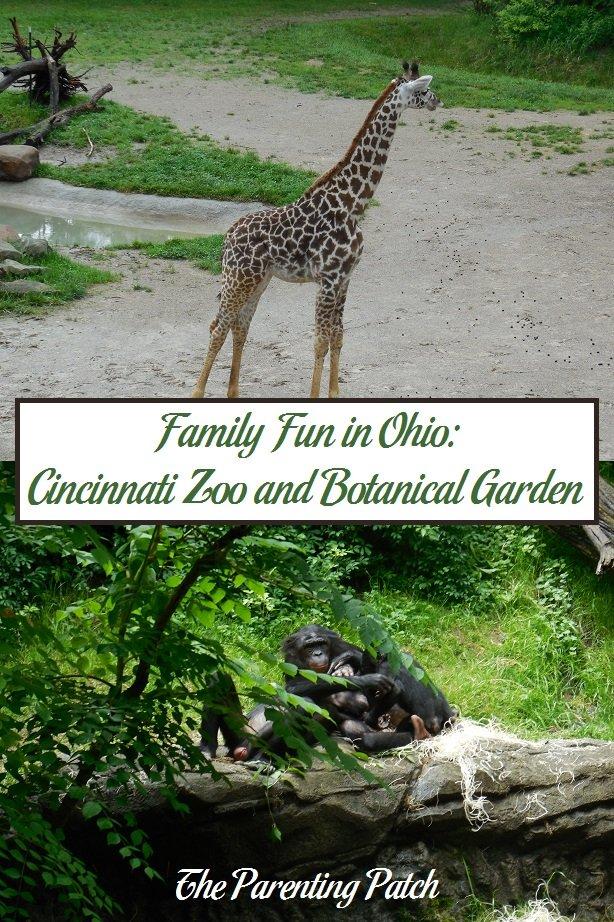 Family Fun in Ohio: Cincinnati Zoo and Botanical Garden