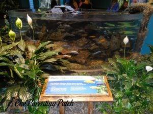 African Fish at the Newport Aquarium