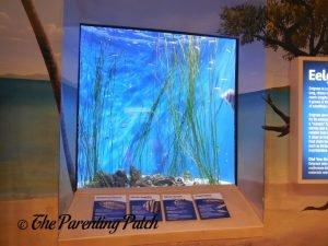 Small Tank at the Newport Aquarium
