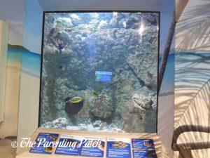 Reef Tank at the Newport Aquarium