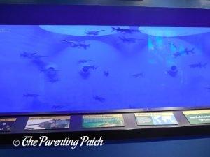 Paddlefish at the Newport Aquarium