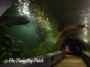 Acrylic Tube at the Newport Aquarium