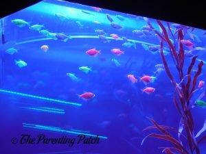 Fish Swimming Above Tube at the Newport Aquarium