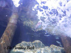 Looking Up at Fish at the Newport Aquarium