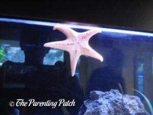 Starfish at the Newport Aquarium
