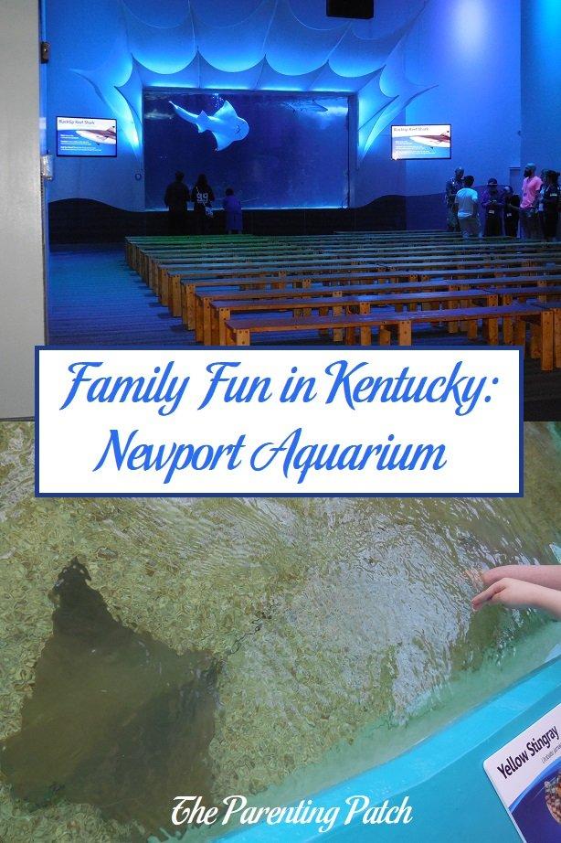 Family Fun in Kentucky: Newport Aquarium