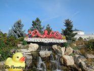 The Duck and Shedd Aquarium