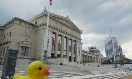The Duck and the Field Museum of Natural History