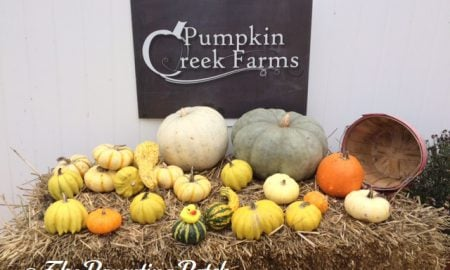 The Duck and Pumpkin Creek Farms