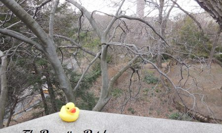 The Duck and the Ramble