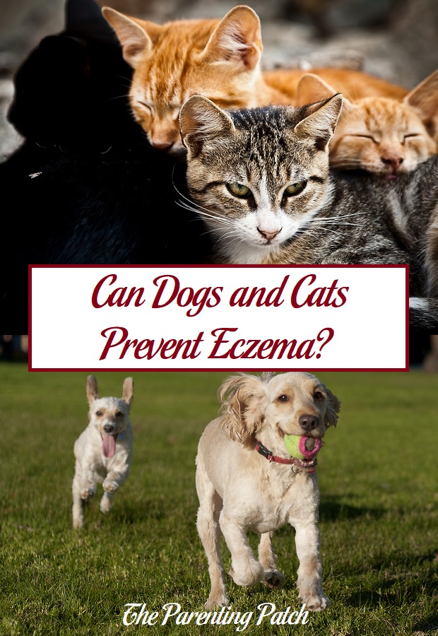 Can Dogs and Cats Prevent Eczema?