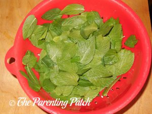 Peppermint Leaves for Peppermint Extract