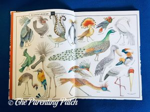 Inside Pages of 'Wonders of Nature: Explorations in the World of Birds, Insects, and Fish' 1Inside Pages of 'Wonders of Nature: Explorations in the World of Birds, Insects, and Fish' 1