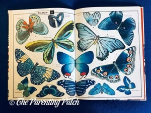 Inside Pages of 'Wonders of Nature: Explorations in the World of Birds, Insects, and Fish' 2