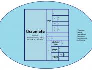 Word Matrix: Thaumate