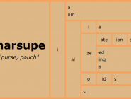 Word Matrix: Marsupe