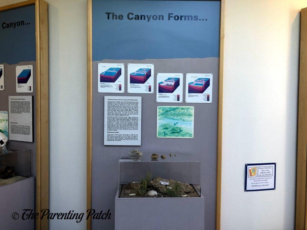 Canyon Display at the Tecolote Nature Center
