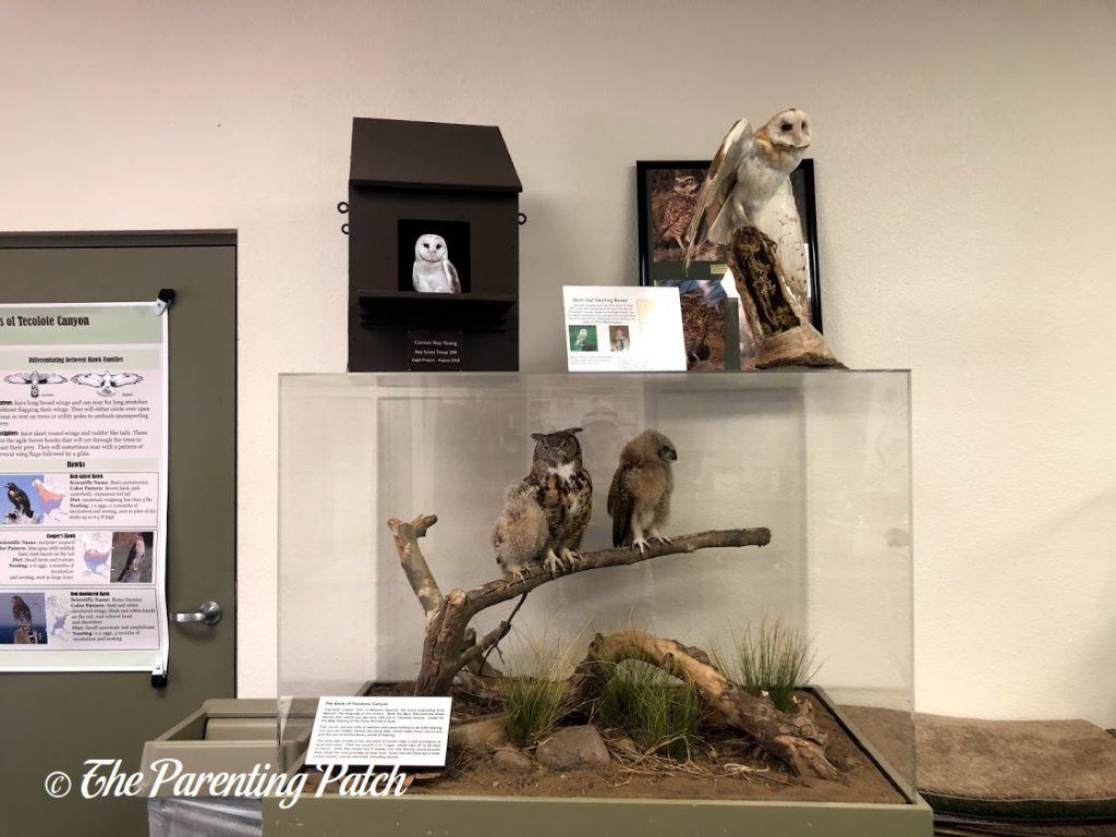 Owls at the Tecolote Nature Center