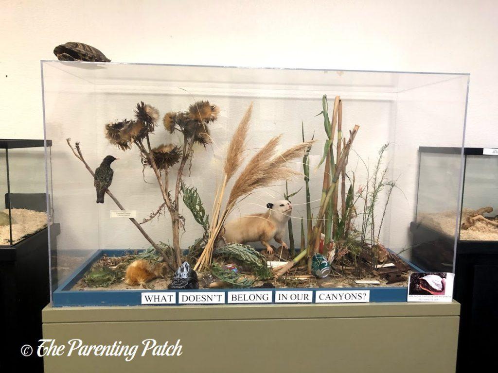 Trash Display at the Tecolote Nature Center