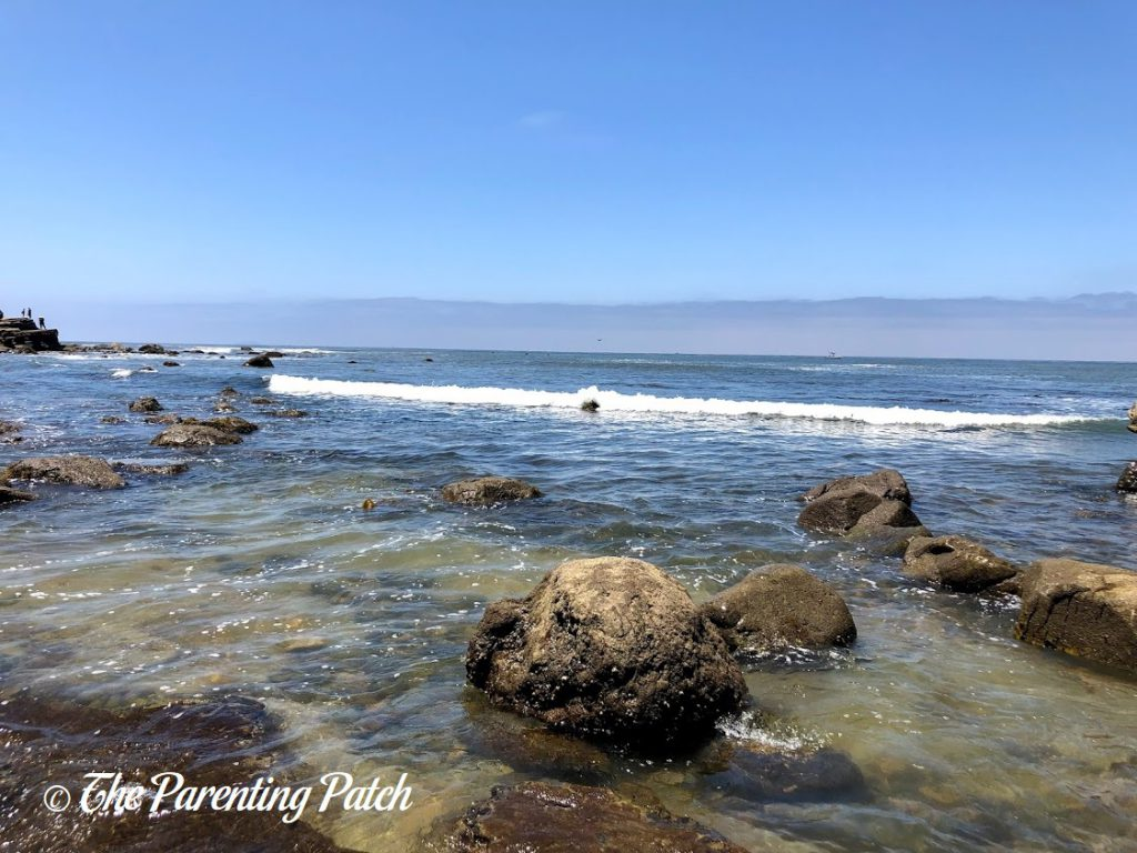 Point Loma Tide Pools at Cabrillo National Monument 1